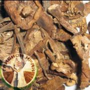 Сушеные маслята оптом и в розницу