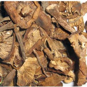 Сушеные маслята высокго качества купить оптом и в розницу