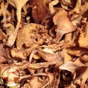 Сухие грибы лисички купить